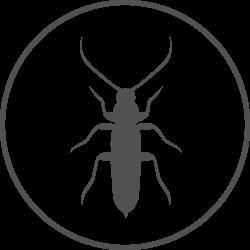 Bugs_grey250