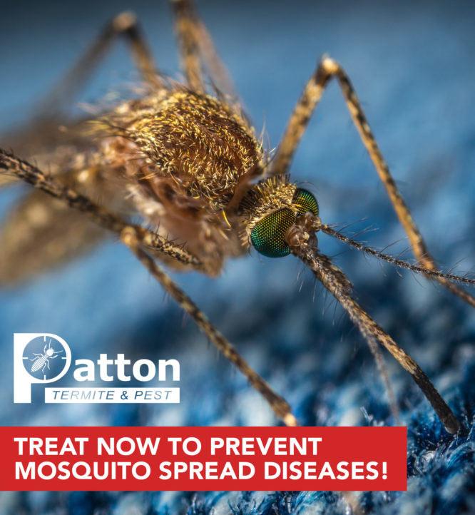 Patton_Mosquito_FB_0121-3-666x722