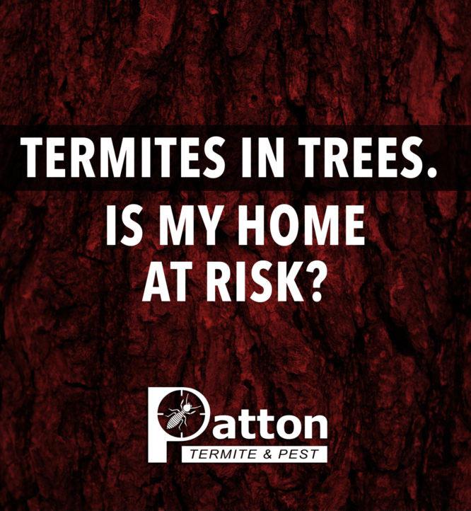 Patton_TermitesinTrees_FB_0321-1-666x722-1